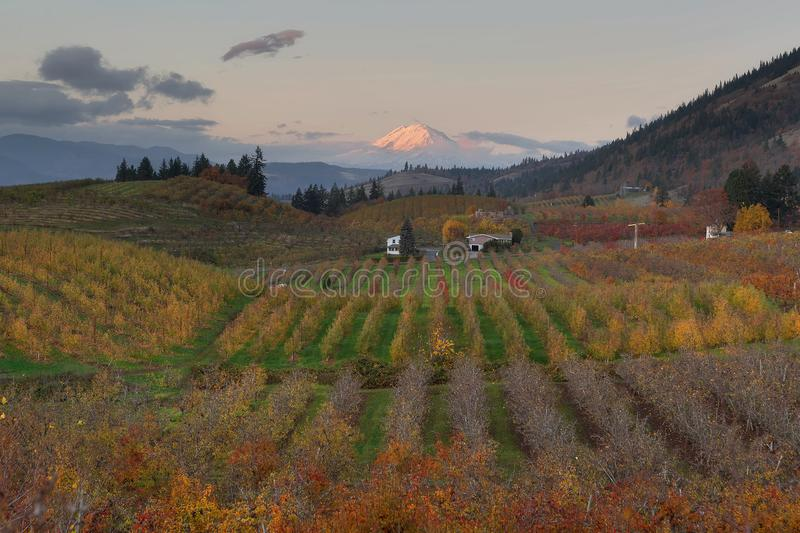 Mount Adams at Hood River Oregon during Sunset. Mount Adams at Hood River Oregon fruit orchards during sunset in fall season stock images
