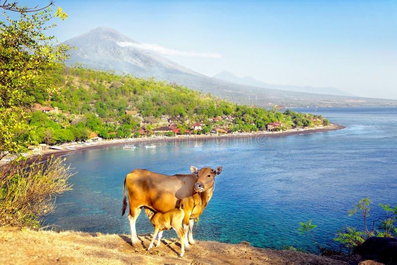 Mount Agung on Bali Island, Indonesia royalty free stock photo