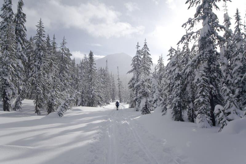 Mount Bachelor XC Skiing royalty free stock image