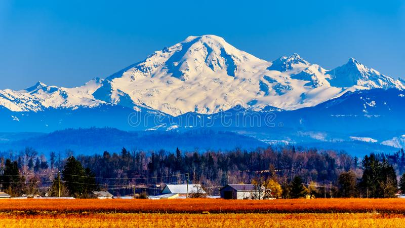 Mount Baker, a dormant volcano in Washington State viewed from the Blueberry Fields of Glen Valley near Abbotsford BC, Canada. Mount Baker, a dormant volcano in royalty free stock image