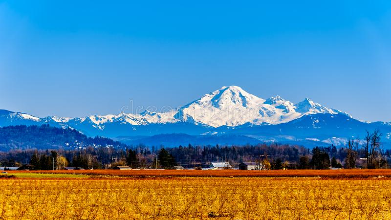 Mount Baker, a dormant volcano in Washington State viewed from the Blueberry Fields of Glen Valley near Abbotsford BC, Canada. Mount Baker, a dormant volcano in stock image