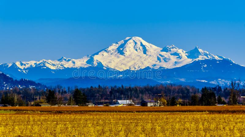 Mount Baker, a dormant volcano in Washington State viewed from the Blueberry Fields of Glen Valley near Abbotsford BC, Canada. Mount Baker, a dormant volcano in stock photos