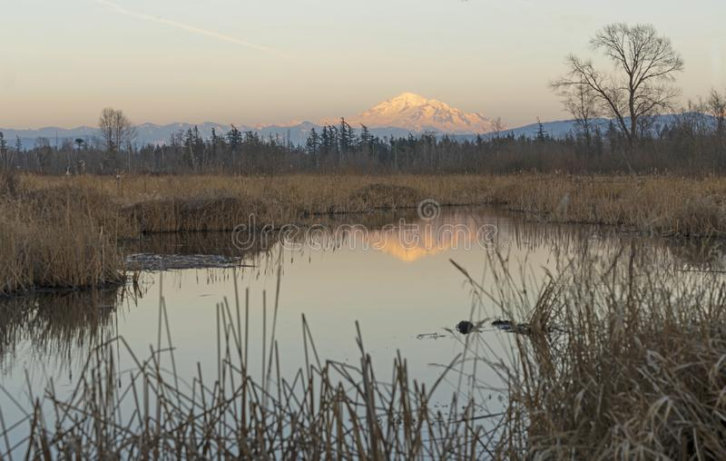 Mount Baker Over Tennant Lake at Sunset Washington State. Mount Baker reflects glowing in the water over Tennant Lake in Ferndale Washington stock images