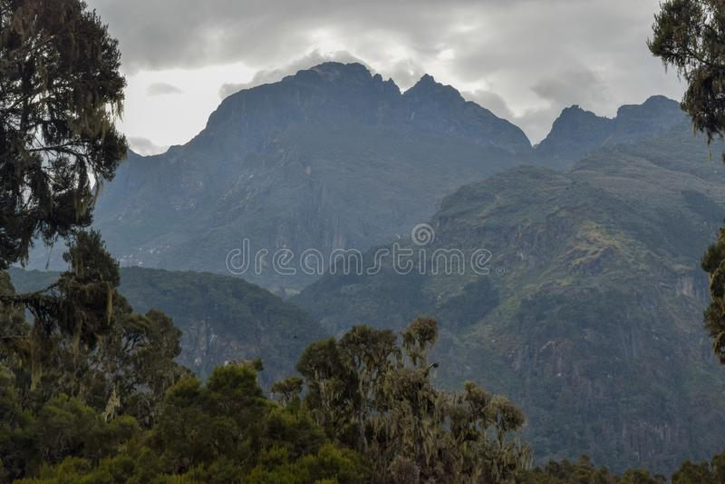 Mount Baker in the Rwenzori Mountains, Uganda. Mount Baker seen from Bujuku Valley, Rwenzori Mountains National Park, Kasese District, Uganda stock photos