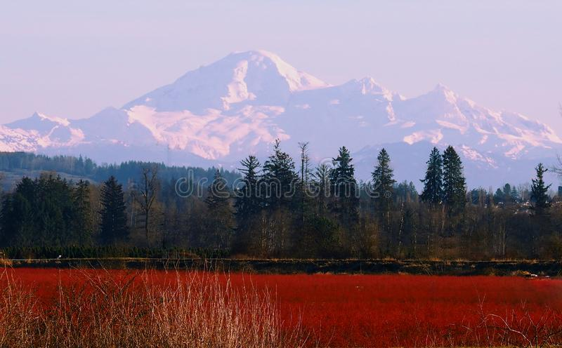 Mount Baker. View of Mount Baker from Maple Ridge, British Columbia, Canada stock photo