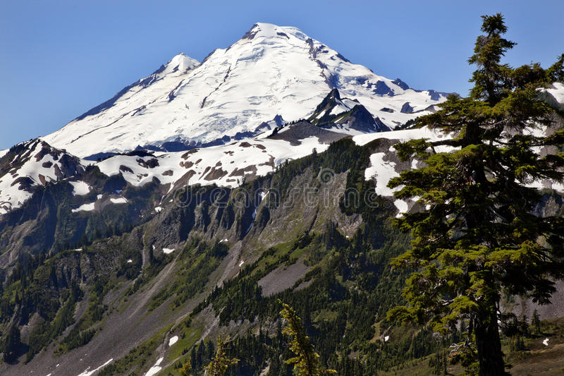 Mount Baker Washington State. Mount Baker Large Evergreen from Artist Point Mount Baker Highway Snow Mountain Washington State Pacific Northwest royalty free stock images