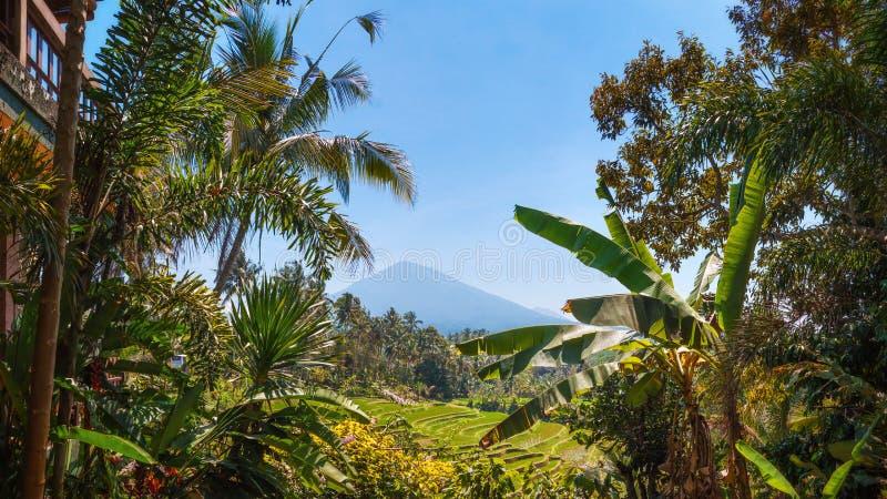 Mount Batukaru, Bali, Indonesia stock images