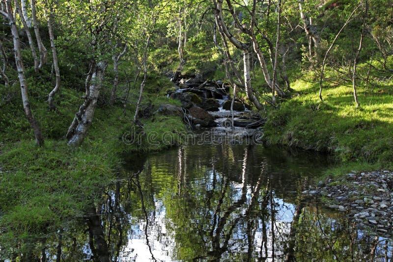 mount creek zdjęcie stock