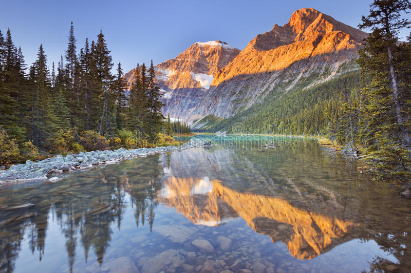 Mount Edith Cavell, Jasper NP, Canada at sunrise. Mount Edith Cavell reflected in Cavell Lake in Jasper National Park, Canada. Photographed at sunrise royalty free stock image