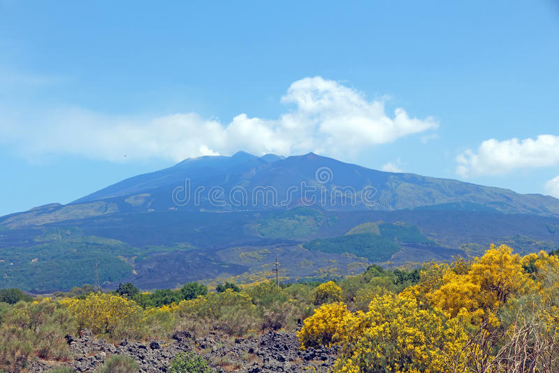 Mount Etna. View of Mount Etna with yellow blossom at the foreground at summer time,Sicily,Italy stock photography