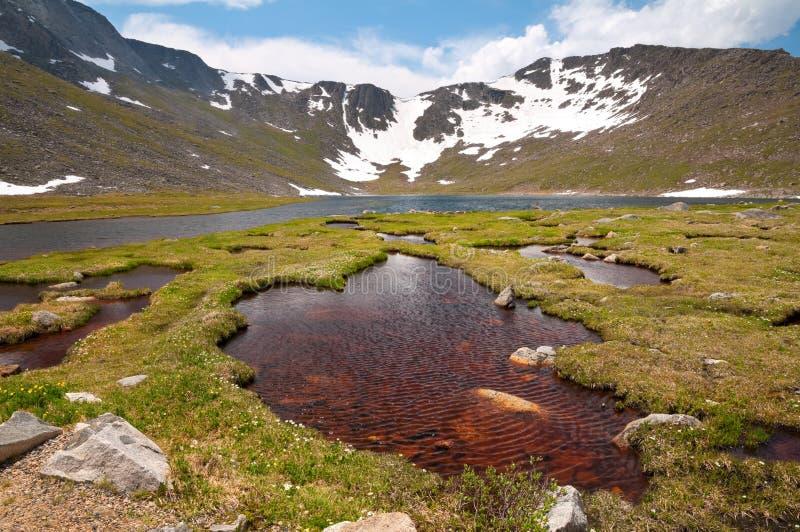 Mount Evans Tundra royalty free stock photo