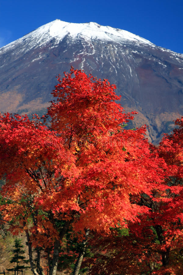Mount Fuji in Fall stock images