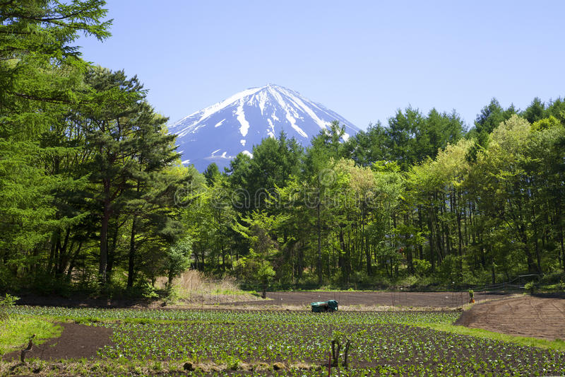 Mount Fuji, Fields, and Trees in Japan. A view of Mount Fuji with farming fields, trees and a blue sky royalty free stock photography