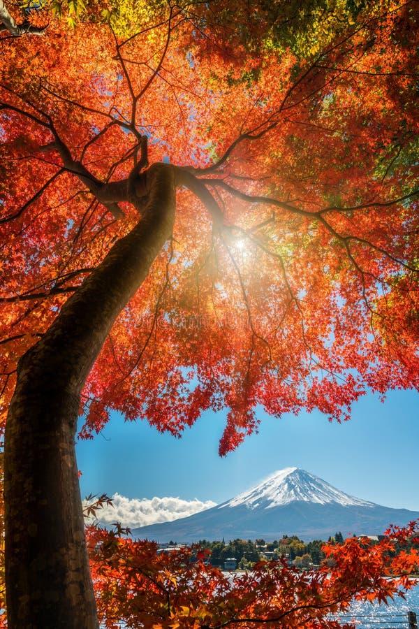 Mount Fuji i Autumn Color, Japan royaltyfria bilder