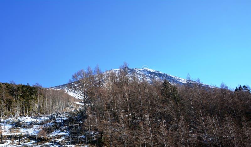 Mount Fuji i morgonen japan royaltyfri foto
