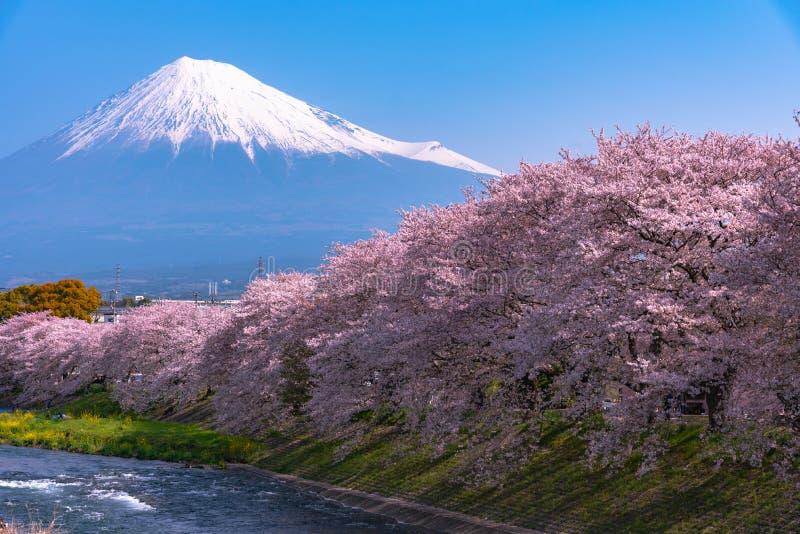 Mount Fuji ( Mt. Fuji ) with Sakura cherry blossom at the river in the morning, Shizuoka, Japan. stock photos