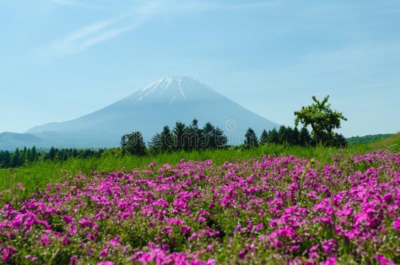 Mount Fuji och rosa mossa på Japan, suddighet f för selektiv fokus fotografering för bildbyråer