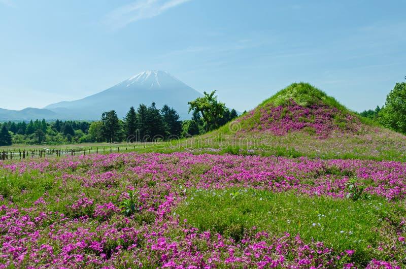 Mount Fuji och rosa mossa på Japan, suddighetsförgrund för selektiv fokus royaltyfri bild