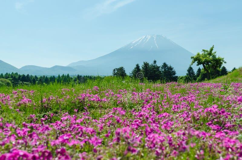 Mount Fuji och rosa mossa på Japan, suddighetsförgrund för selektiv fokus arkivbild