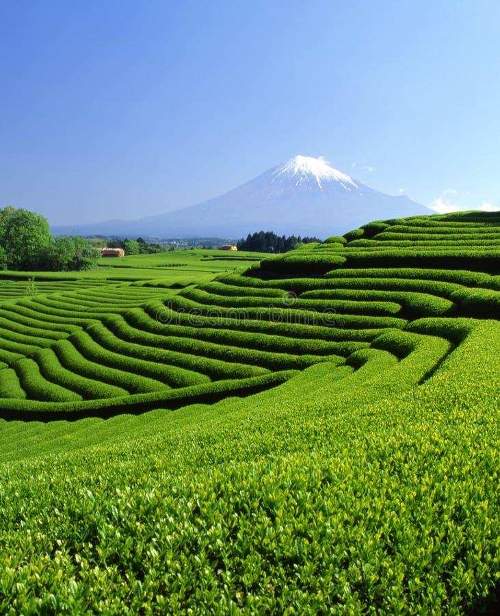 Mount Fuji XCII royalty free stock photography