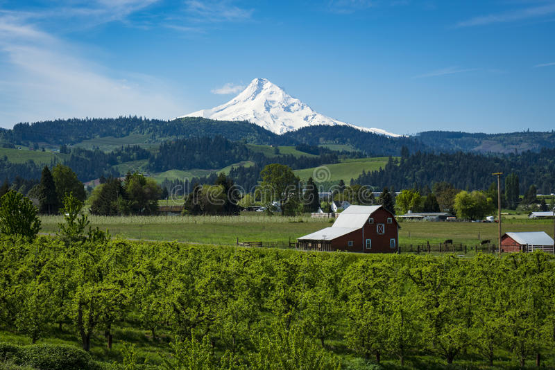 Mount Hood among apple orchards, in Oregon royalty free stock photography