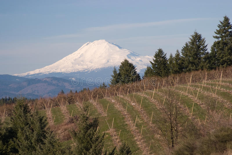 Download Mount Hood from Hood River stock image. Image of america - 17968571