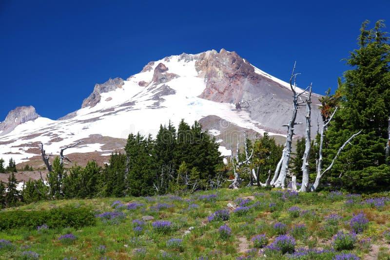 Mount Hood in Oregon stock image