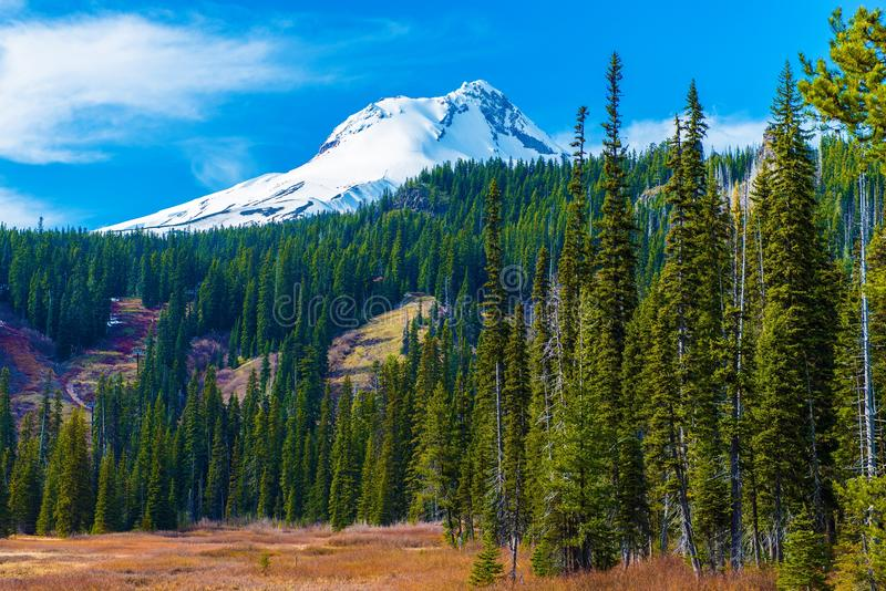 Mount Hood in Oregon royalty free stock images