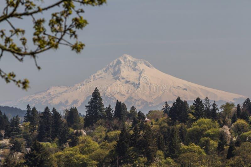 Mount Hood Stock Photo