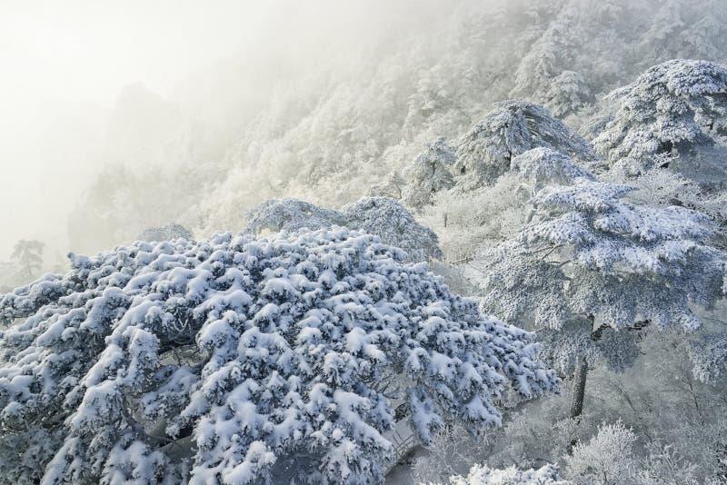 Mount Huangshan snow royalty free stock photo