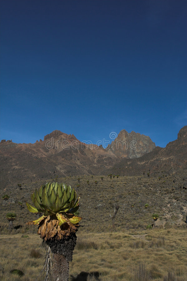 Mount Kenya 3 stockbild