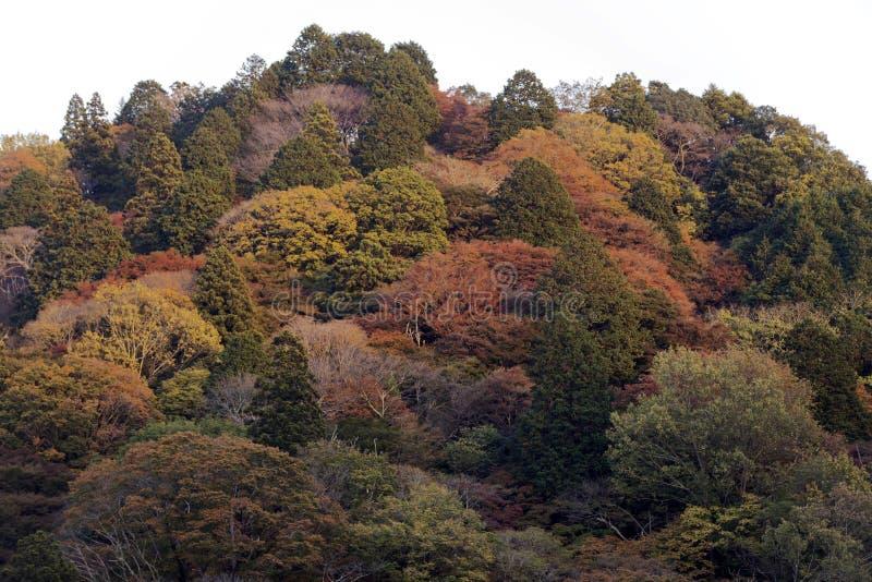 Mount Limori in Korankei stock photo