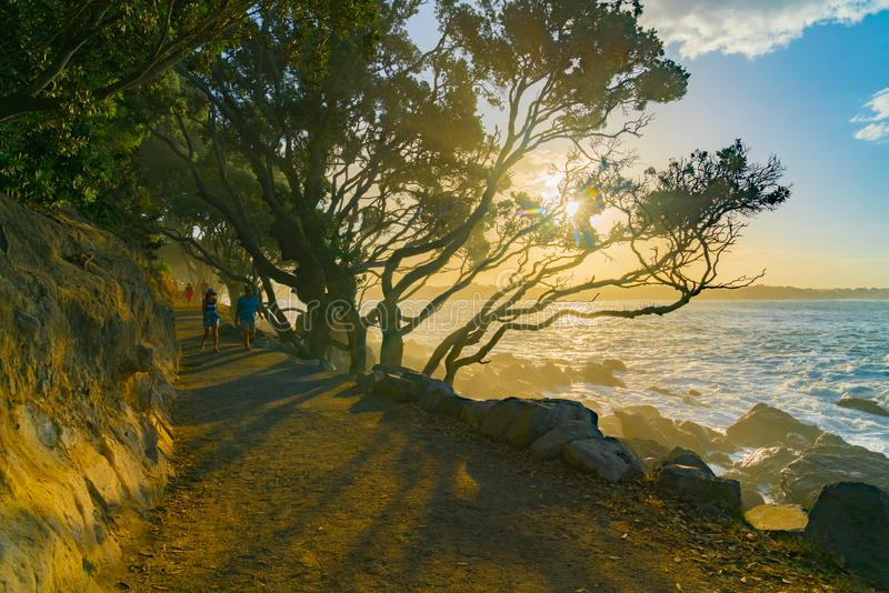 Base track popular walk with people. MOUNT MAUNGANUI NEW ZEALAND - FEBRUARY 10 2019: Base track popular walk with people walking caught in evening suns rays and stock image