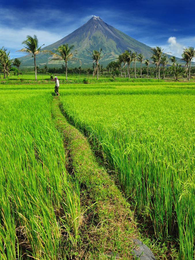 Free Mount Mayon Rice Farmer Stock Images - 13052324
