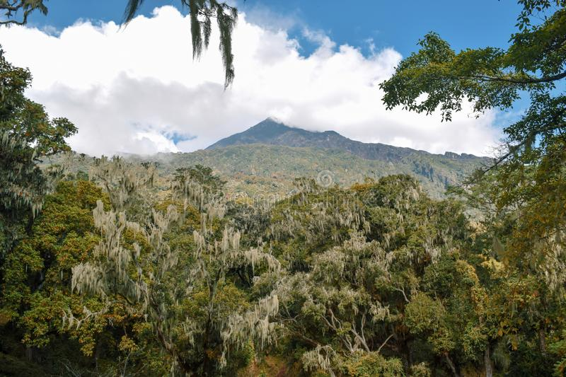 Mount Meru in Tanzania. Mount Meru against a blue sky, Arusha National Park, Tanzania royalty free stock images