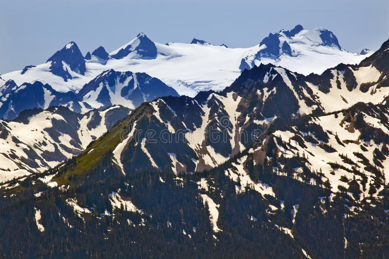 Mount Olympus Snow Mountains Hurricane Ridge. Snow Mountains Hurricane Ridge Olympic National Park Washington State Pacific Northwest Closeup Evergreen stock photo