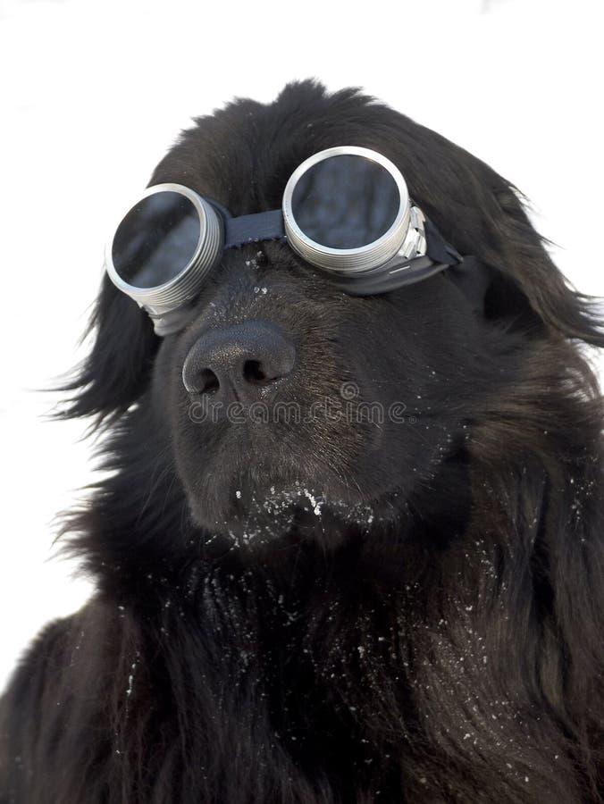 mount psów fotografia stock