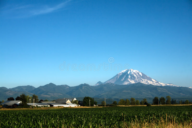 Mount Rainier and Cornfield
