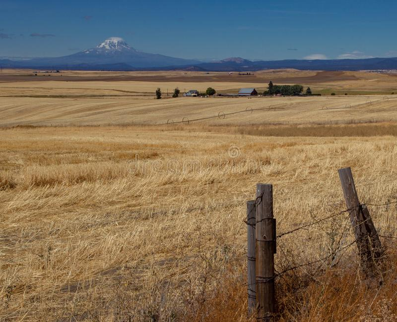Mount Rainier in the Distance, Washington, field and barns in between. From roadside stop and fenceline royalty free stock photos