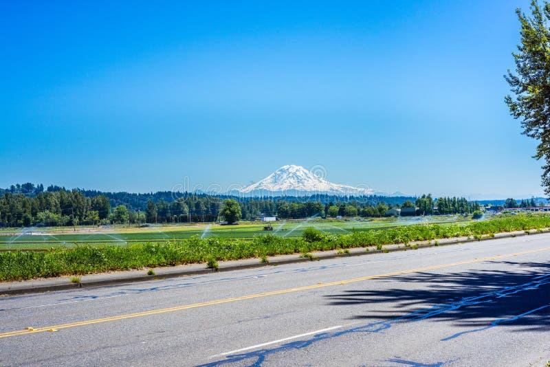 Mount Rainier från den kastanjebruna dalen royaltyfria foton