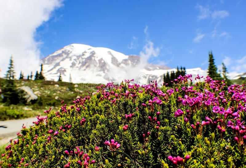 Mount Rainier i den Seattle staten Washington arkivbilder
