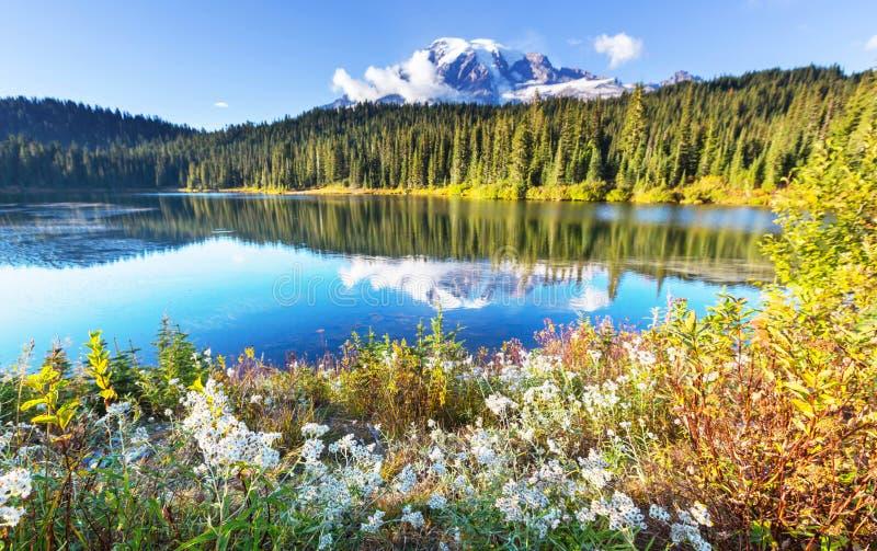 Mt.Rainier. Mount Rainier national park, Washington stock image