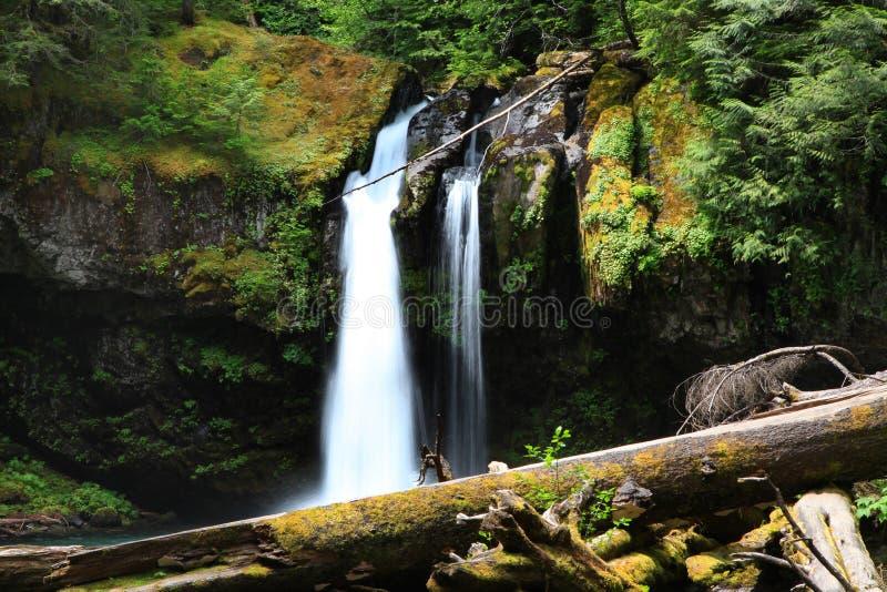 Mount Rainier vattennedgångar royaltyfria bilder
