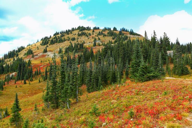 Mount Rainier, Washington. Fall red flowers stock photos