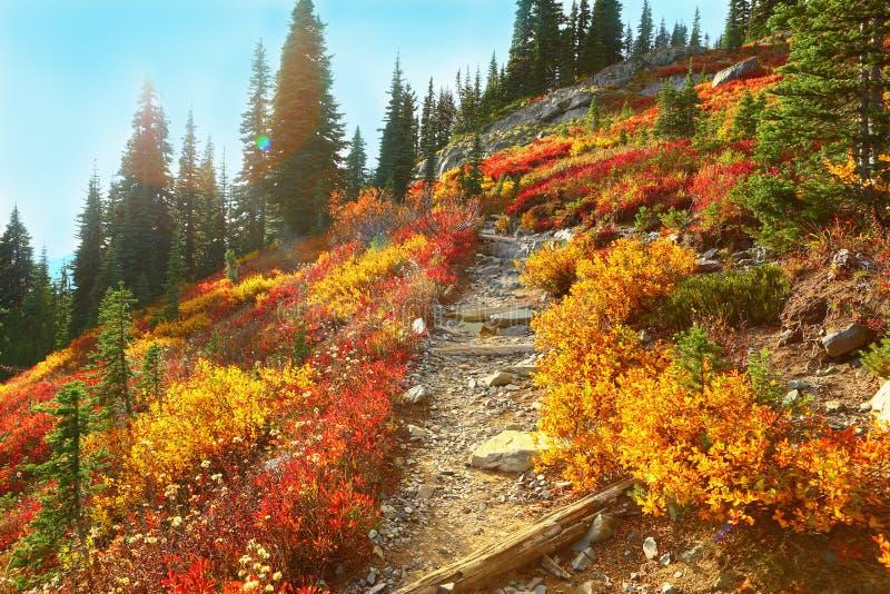 Mount Rainier, Washington royalty free stock photography