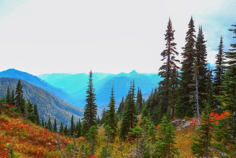 Mount Rainier, Washington royalty free stock photo