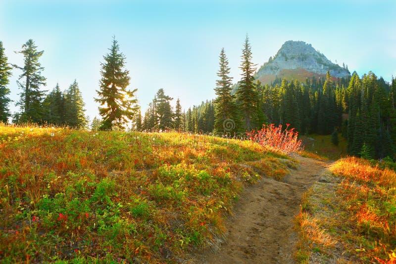 Mount Rainier, Washington. Paradise Trail. royalty free stock photography
