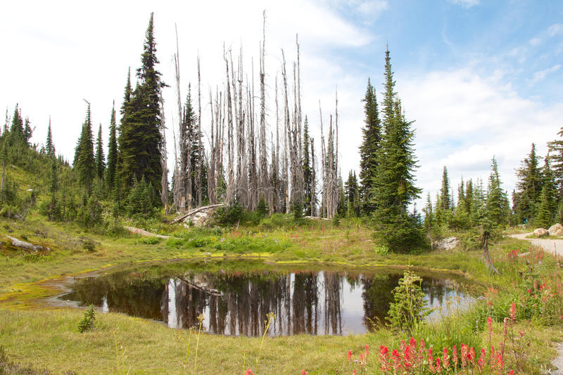 Mount Revelstoke Pond. View on a mysterious pond on Mount Revelstoke, Canada stock images
