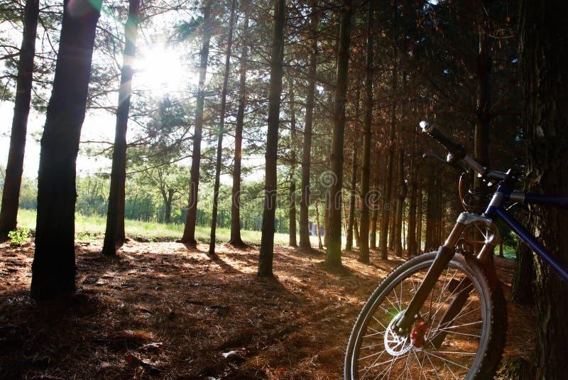 mount rower obraz stock