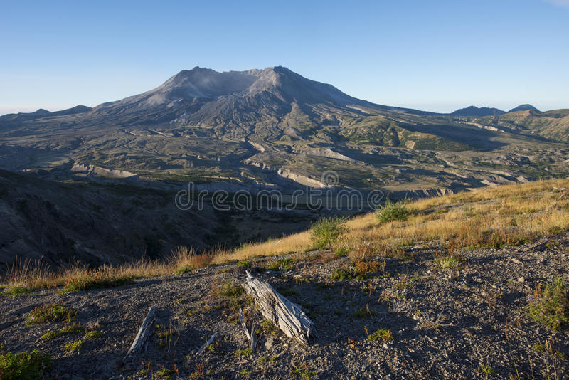 Mount Saint Helens and old blast zone. An old fallen tree from the blast of Mount Saint Helens eruption of many years ago stock images